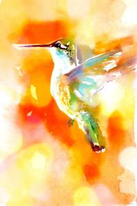 Janet hummingbird3